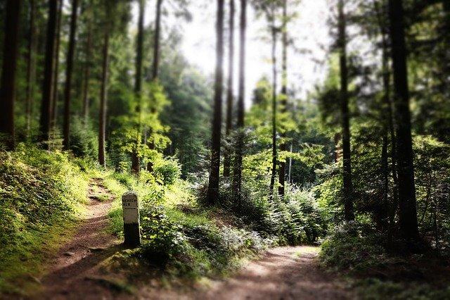 lesní cesty